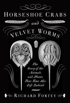 Booktopia has Horseshoe Crabs and Velvet Worms, The Story of the Animals and Plants That Time Has Left Behind by Richard Fortey. Buy a discounted Paperback of Horseshoe Crabs and Velvet Worms online from Australia's leading online bookstore. The Animals, Charles Darwin, Velvet Worm, Image Doc, Evolution, Big Stuffed Animal, Science Writing, Science Books, Living Fossil