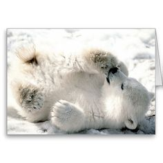 ==>>Big Save on          Polar Bear Cub Greeting Cards           Polar Bear Cub Greeting Cards so please read the important details before your purchasing anyway here is the best buyHow to          Polar Bear Cub Greeting Cards Review from Associated Store with this Deal...Cleck Hot Deals >>> http://www.zazzle.com/polar_bear_cub_greeting_cards-137074037776483983?rf=238627982471231924&zbar=1&tc=terrest