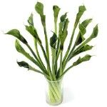 #Wholesale Flowers - #Calla Green
