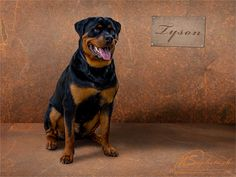 Tyson - Der Rottweiler Rottweiler, Dogs, Animals, Animales, Animaux, Pet Dogs, Rottweilers, Doggies, Animal