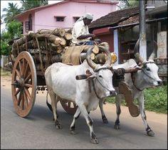 Bullock Cart, Kerala, India