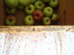local lunch box: apple sauce, apple butter, apple jam