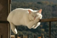 Having a nap...