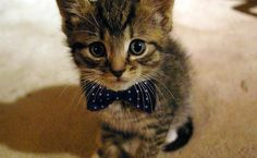 Cat with class