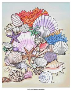 Seashells Coloring Web page Prompt Obtain Mandala Art, Coloring Book Pages, Hand Coloring, Sea Shells, Embroidery Patterns, Illustration, Artwork, Art Drawings, Sketches