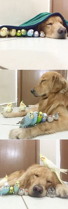 a dog 8 birds and a hamster are the most adorable friends