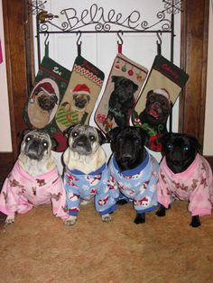 Slumber Party! #Pug #Dog #Party #SlumberParty #Fun