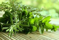 Piante ed erbe facili da crescere e tenere in casa per curare con rimedi naturali disturbi, fastidi e ferite con aloe vera, lavanda, rosmarino