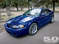 Google Image Result for http://image.mustang50magazine.com/f/featuredvehicles/m5lp_1008_2003_ford_mustang_cobra_terminator/29307472%2Bpheader_460x1000/m5lp_1008_01_o%2B2003_ford_mustang_cobra%2Bcobra.jpg