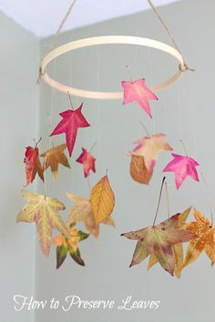 How to Preserve Leaves (with glycerin and waxed paper)~ BuggyandBuddy.com