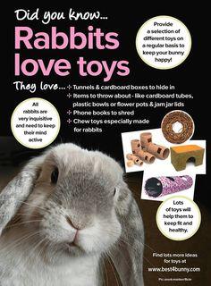 #Rabbits love toys!