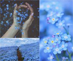 jasne lato niezapominajka Light Spring, Soft Summer, Summer Flowers, Summer Colors, Bright, Type 1, Beauty, Dressing, Deep