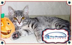Meet Luna a 4-year-old cat up for adoption at the Humane Society of Greater Dayton. Every time her photo is repinned The Problems Solvers will donate a dollar to the Humane Society. #cat #animals