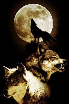 Wolves!!!!!!!!