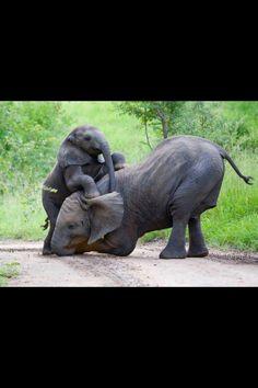 I like elephants