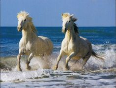 Paardenblog