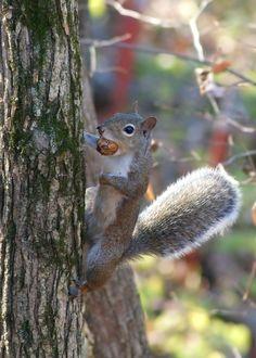 Awww Nuts by Misty Dawn Seidel (Misty DawnS)