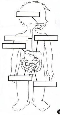digestivo.jpg 268×512 pikseliä