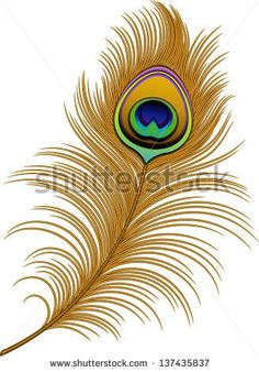 Peacock Feather Stock Photos, Royalty-Free Images & Vectors ...