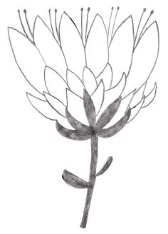 Protea #Protea #Drawing #Doodle Weird Drawings, Simple Line Drawings, Art Drawings, Drawing Sketches, Pencil Drawings, Protea Art, Protea Flower, Nature Illustration, Botanical Illustration