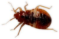 Detection, Prevention, and Removal of Bed Bugs!