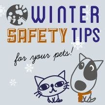 With winter in full swing it can be easy to overlook the dangers of cold weather for our pets and forget about the importance of pet safety.
