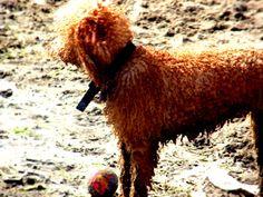 dog in the beach (Lido delle Nazioni)