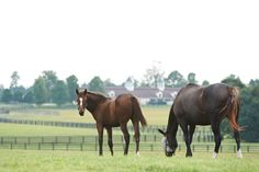 Happy Wednesday!  As you may know, we were in Kentucky last week visiting Zenyatta, 14Z, and Ziconic. We posted photos from Lane's End on Instagram and Facebook. From Zenyatta's blog. 9/18/14