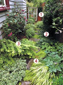 Planting In A Narrow Alleyway Fern Plants And Gardens