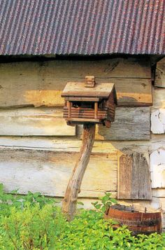 a crooked tree trunk, a rustic birdhouse