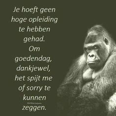Je hoeft geen hoge The concept of sport is an activity that emerges with the Believe Quotes, Quotes To Live By, Me Quotes, Motivational Quotes, Customer Service Quotes, Respect Quotes, Country Music Quotes, Achievement Quotes, Dutch Quotes