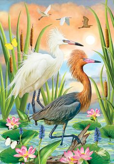 Reddish Herons - Two Phases by Rosiland Solomon