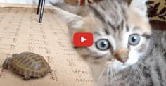 Video Funny Cats and Babies playing together - Cute Babies and Pets Compilation Baby Kittens, Kittens Cutest, Cats And Kittens, Cute Cats, Animals And Pets, Baby Animals, Funny Animals, Cute Animals, Funny Cats