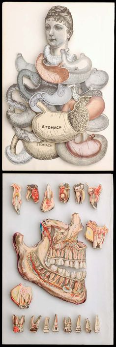 This whole site is just a collection of anatomy inspired art!