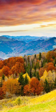 Autumn #Autumn #AutumnLeaves #紅葉 #秋