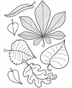 Images for coloring autumn - Coloring Pages Autumn Crafts, Autumn Art, Colouring Pages, Coloring Books, Leaf Template, Owl Templates, Crown Template, Applique Templates, Flower Template