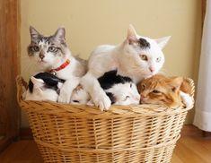 : Another basket of mischief :