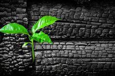 Le charbon végétal activé : indispensable à la maison