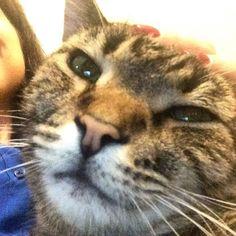 #Frisky taking a late-night selfie  #catselfie #cuddling #funnycat #catsofinstagram by mathkitty22