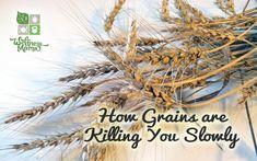 How Grains Are Killing You Slowly from wellnessmama.com