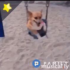 Swinging life!   #swing #dog #dogs #doggy #puppy #fun #funny #cute #follow #followme #play #happy #Pamily #playground #animals #love