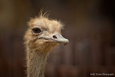 The Disapproving Ostrich