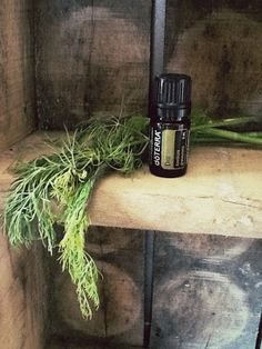 dill essential oil doterra pdf