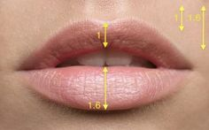 Proportion and volume - the keys to beautiful lips