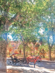 From the food to the weather, the people, the beaches, the architecture, the cost of living and safety - find out what living in Palermo is really like! Palermo Italy, Places In Italy, Sardinia, Kirchen, World Heritage Sites, Sicily, Beautiful Beaches, Day Trips, The Good Place