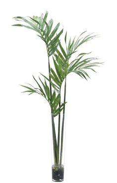 Natural Decorations, Inc. - Kentia Plam Glass Cylinder x 473 Palm Plant, Trees To Plant, Planting Shrubs, Planting Flowers, Tree Photoshop, Photoshop Images, Kentia Palm, Color Plan, Plant Pictures