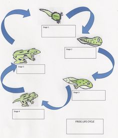 Cycle of a Frog: Lesson Plan for Elementary Students Life Cycle of a Frog: Lesson Plan for Elementary StudentsLife Cycle of a Frog: Lesson Plan for Elementary Students 6th Grade Activities, Frog Activities, Teaching Activities, Teaching Science, Teaching Ideas, Lifecycle Of A Frog, Second Grade Science, Frog Life, Elementary Science