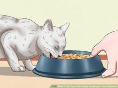Como obter o seu gato para parar de saltar no seu teclado