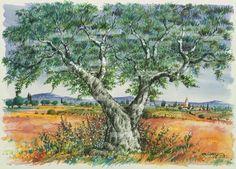 oliviers  | Olivier de Provence