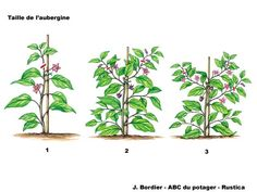 Astuces potager on pinterest legumes culture and sons - Comment tailler la menthe ...
